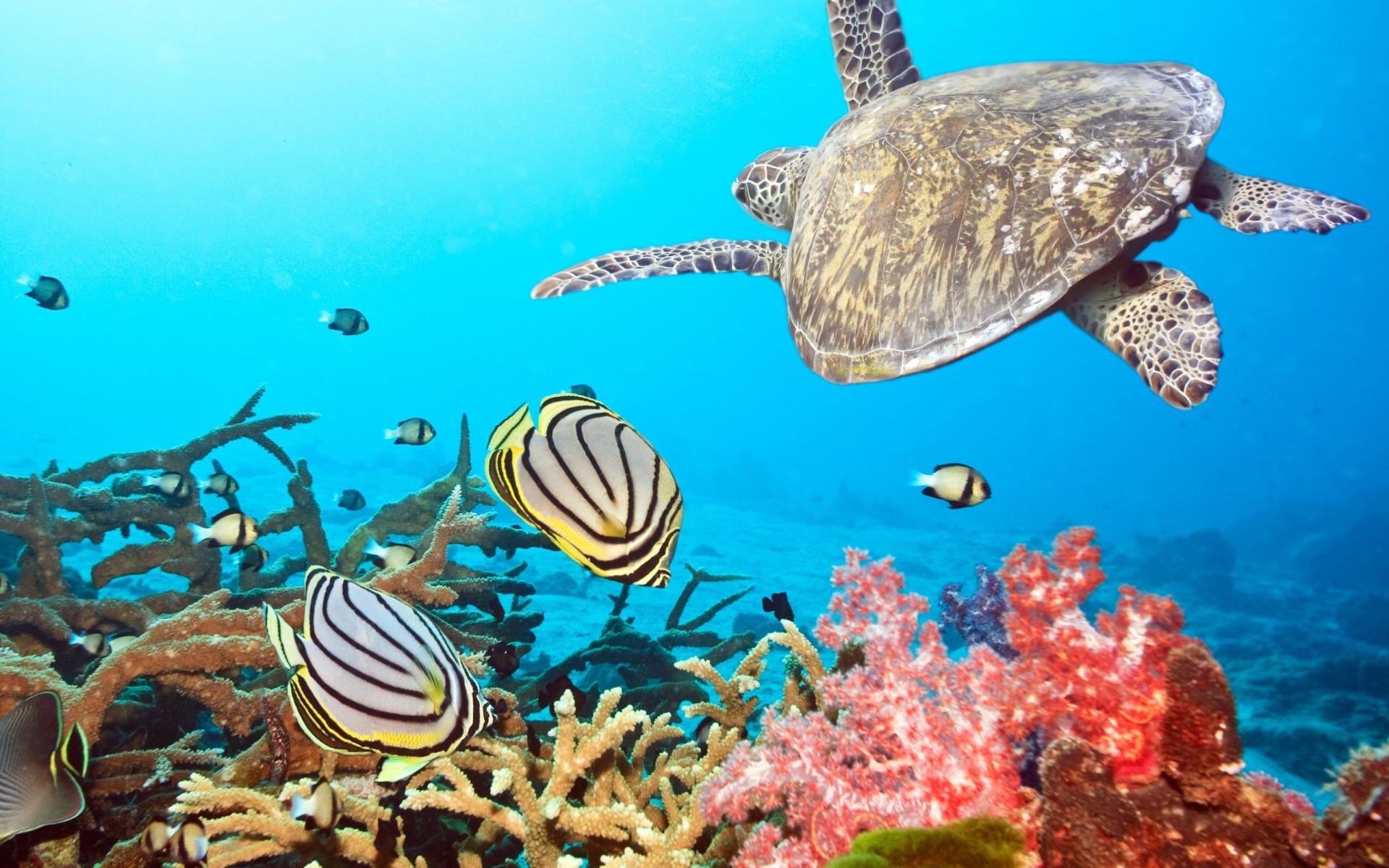 Vistoso Colorante De Arrecife De Coral Elaboración - Dibujos Para ...