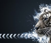 Wallpaper gratis de un tigre blanco, en HD.